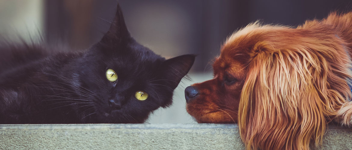 Products, Pets, Cats and Dogs